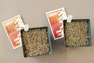 Native Seed Sowing Hands-On Workshop, Oct 28 10 – 11:30am