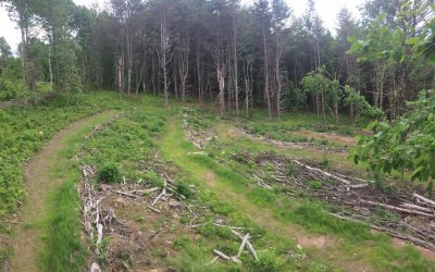 Merryspring hosts permaculture workshop: Manage erosion, promote habitat March 13